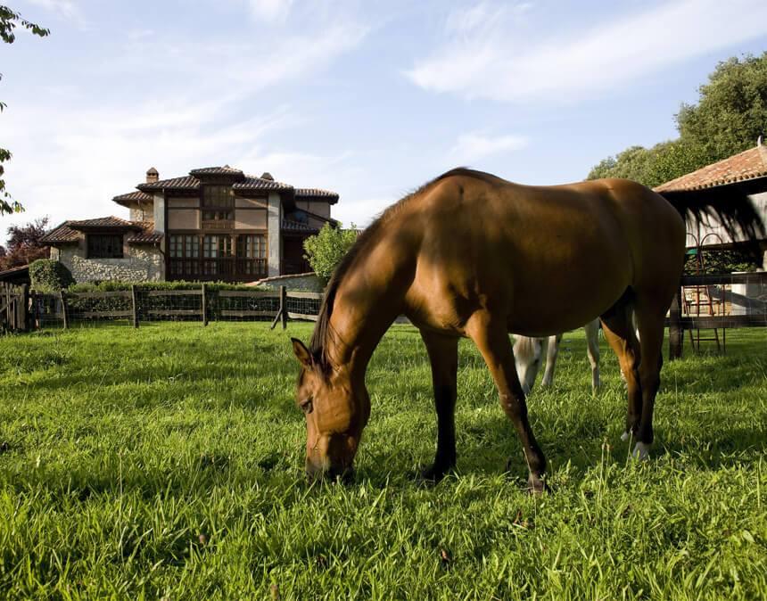 Paseos-a-caballo